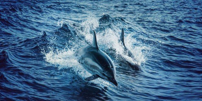 Suivre les animaux marins grâce à l'IoT : un défi technique – Objetconnecte.com