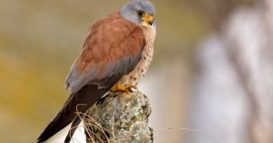 Responsabilité civile du fait de la destruction sans autorisation d'espèces protégées