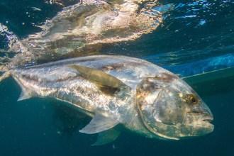 costarica-zancudo-lodge-marlin_025