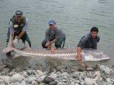sturgeon-fishing-175