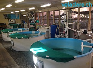 hôpital des tortues de Jeckyll Island
