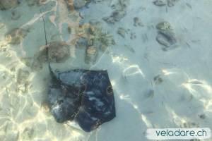 Rochen in Black Point, Exumas, Bahamas