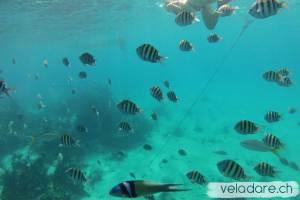 Seaquarium, Exuma, Bahamas