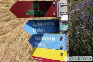 Schild vom Weinweg Weinfelden