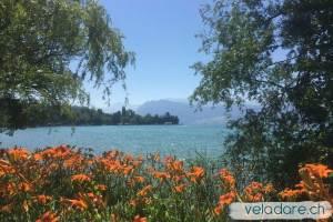 Berges du Lac des 4 Cantons