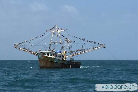 Fischerboot mit Pelikanen
