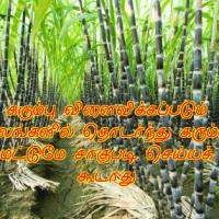 கரும்பு சாகுபடி நிலம் தயார் செய்யும் முறைகள்