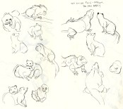 Adelaide Zoo sketches