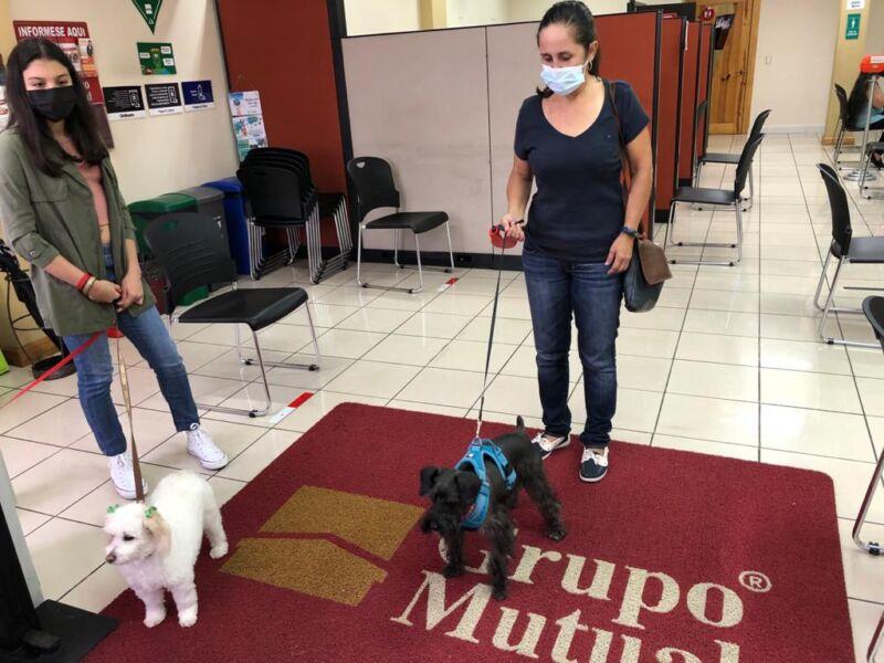 Grupo Mutual Pets Friendly