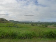 Looking out the bus window at passing sugar cane fields.