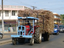 A Massey-Ferguson tractor pulls a load of sugar cane through downtown to the commercial port.