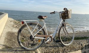 vélo-adulte-haut-de-gamme