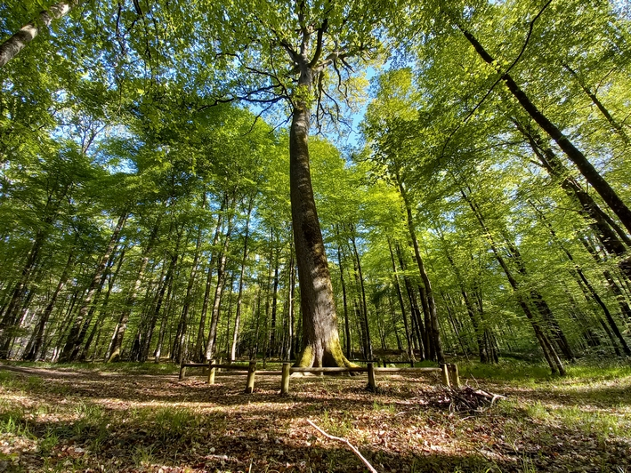 VelocPerchee-foret-chenedelecole