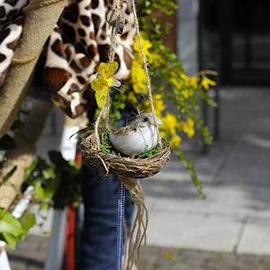 velodingo_detaildeguisements_oiseau_web