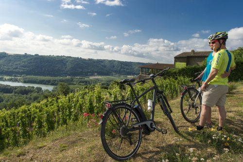 Dans le vignobles sur la ViaRhôna vers Condrieu. Photo Martelet