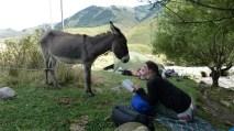 Coquillette supervise nos lectures,En ballade avec Coquillette, vallée de la Chong Kemin