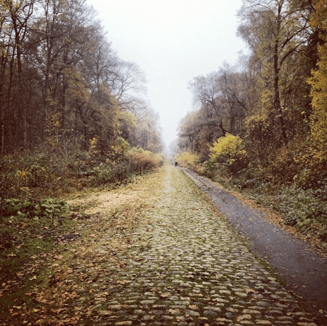 Arenberg Forest
