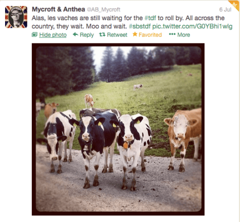 G vaches 1