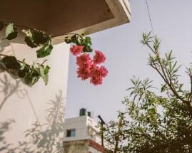 velveteyes.net_saleem-ahmed_rani-road_3