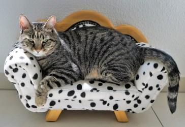 Nasce il mini appartamento per gatti: le FOTO della curiosa abitazione