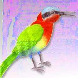 Bunter Vogel