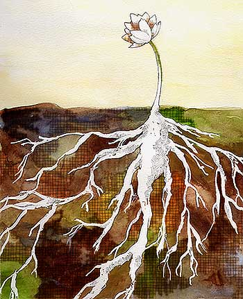 Roots(350x431)