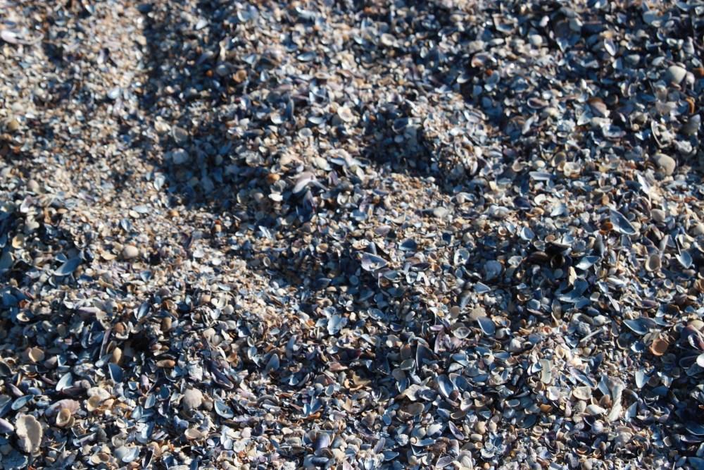 Cabo Polonio - Um farol para o mar e habitantes especiais! (6/6)