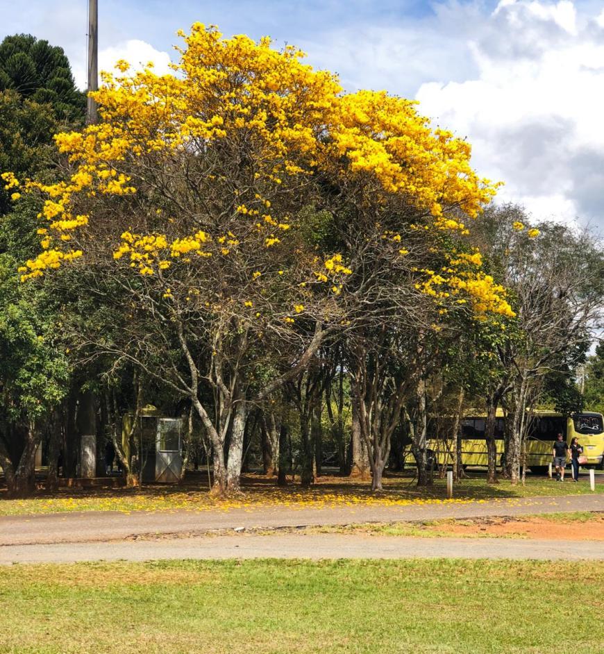 bilheteria parque nacional de vila velha