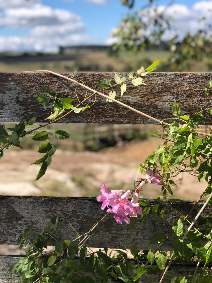 colônia witmarsum