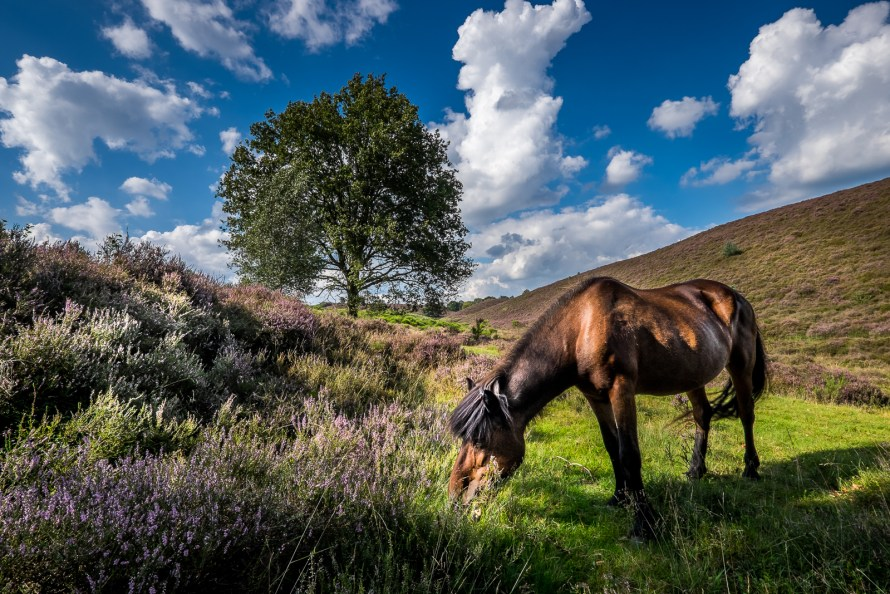 Landscape photography tips - Wagner-fotografie.nl by Daan Wagner