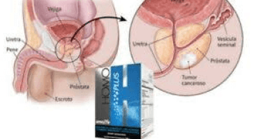 sistema endocrino homo omnilife