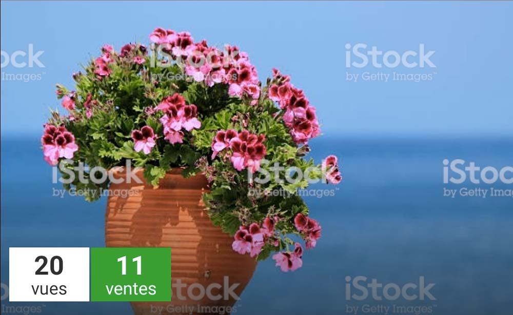 Ventes de Vase de géraniums sur fond d'océan sur iStockphotos | Vendre ses photos en ligne