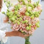 Eustoma 25 flower Pinky, Venera Flowers, online flower delivery dubai