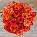 Rose Orange 35 Flower, Venera Flowers, online flower delivery dubai