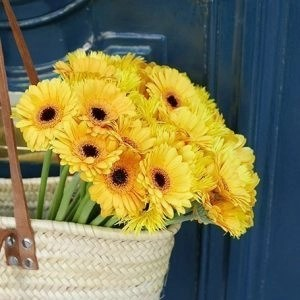 Gerbera20Yellow20Flower20Venera20flowers20201 1