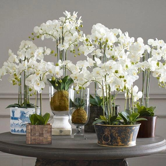 Venera flowers corporate4