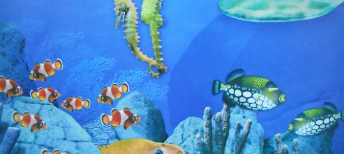 Non solo mare a Jesolo con SEA LIFE Aquarium