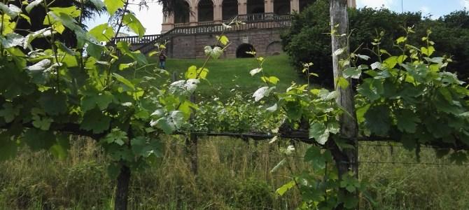 Kid Pass a Villa dei Vescovi: quando giocare diventa istruttivo!