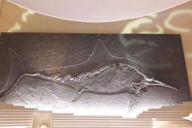museo storia naturale venezia