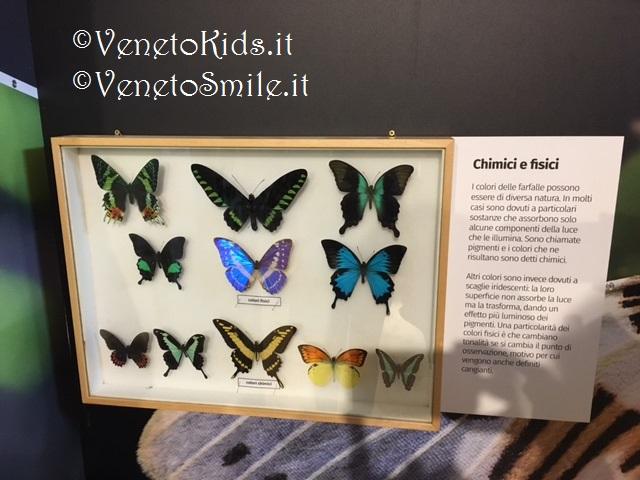 venetokids-veneto-kids-smile-venetosmile-oasi-rossi-casa-farfalle