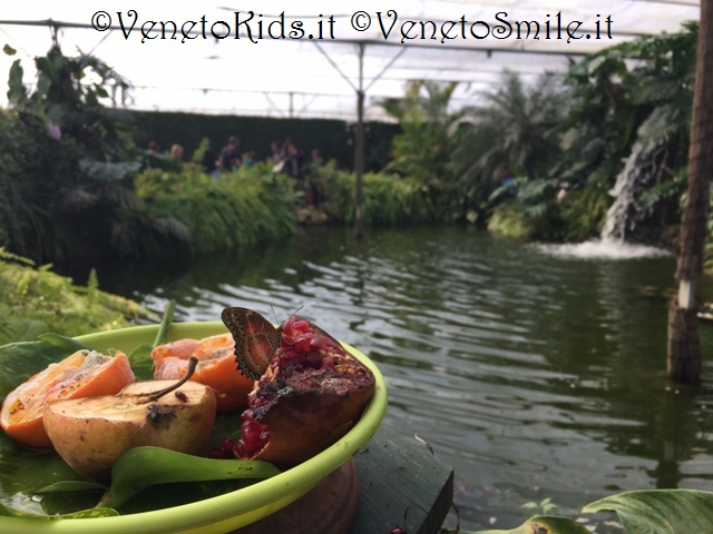 venetokids-veneto-kids-smile-venetosmile-oasi-rossi-schio-casa-farfalle