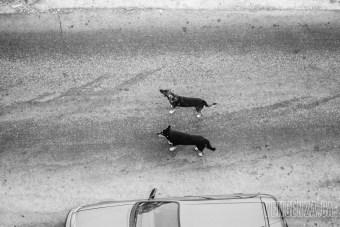 Stray dogs wandering the streets   Piraeus, Greece   Joanna Glezakos