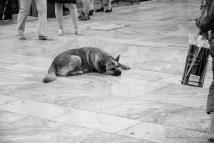 A stray dog sleeping in the middle of the street   Athens, Greece   Joanna Glezakos