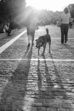 Stray dog at sunset   Athens, Greece   Joanna Glezakos