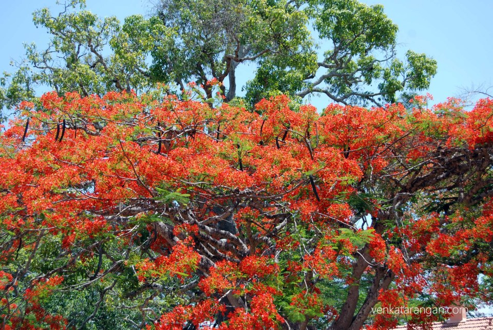 Red flowers add colour to an otherwise green forest cover