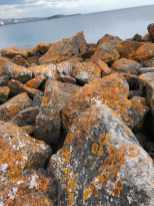 Beautiful rusty spots on the rocks!