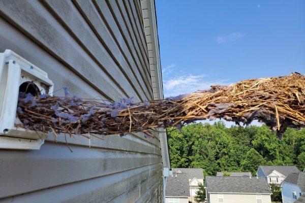 big bird nest dryer vent