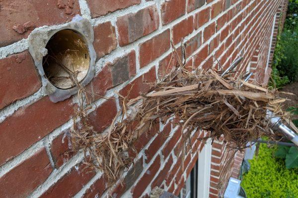 bird nest bathroom vent northern greensboro