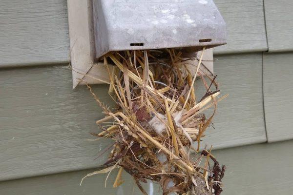 dryer vent bird nest removal kernersville