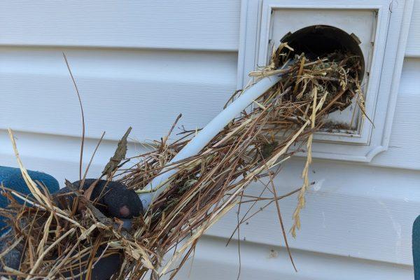 greensboro birds nest removal